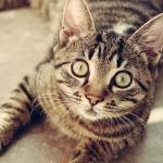Íme 10 tévhit, amely káros a macskád egészségére